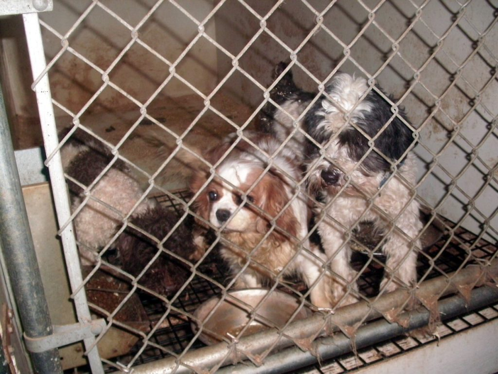 Photos courtesy of A Tail to Tell - a nonprofit organization dedicated to rescuing puppy mill dogs in Pennsylvania.