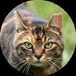 comm-cat-circle