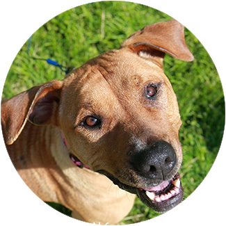 Pit Bull Terriers & Breed-discriminatory Laws - FAQs |