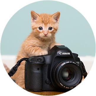 kitten-camera