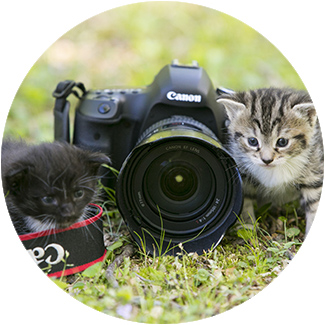 kittens-and-camera-large-cirlce